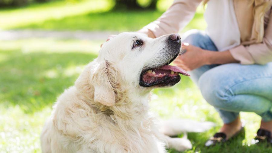 Drömtydning Hund: Drömmar Betydelse, Symboler