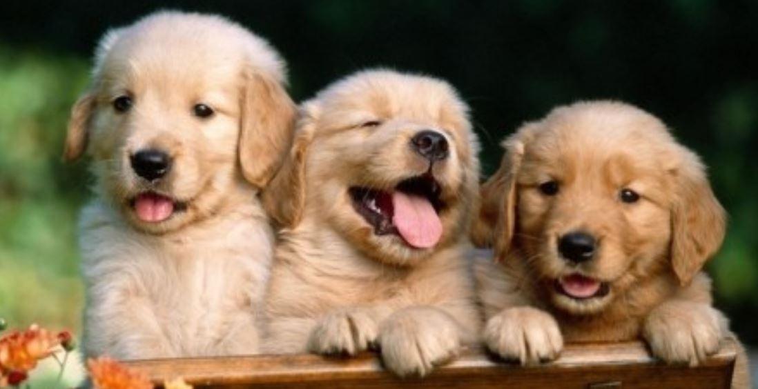 Drömtydning Hundbett: Drömmar Betydelse, Symboler