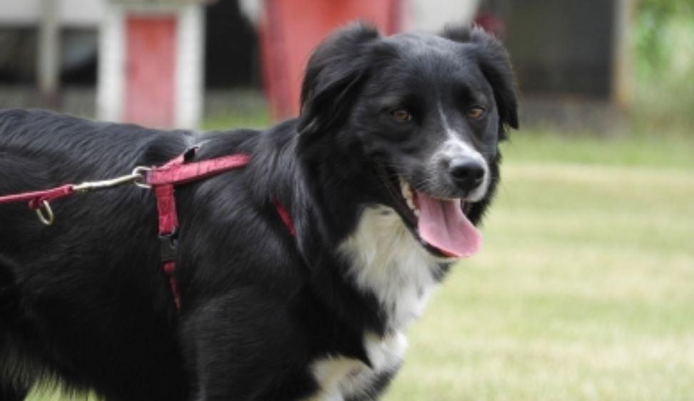 Drömtydning Svart Hund: Drömmar Betydelse, Symboler