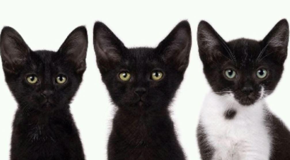Drömtydning Svart Katt: Drömmar Betydelse, Symboler