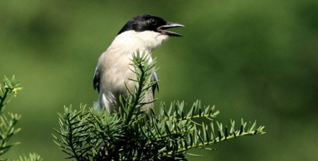 Drömtydning fågel: Drömmar Betydelse, Symboler