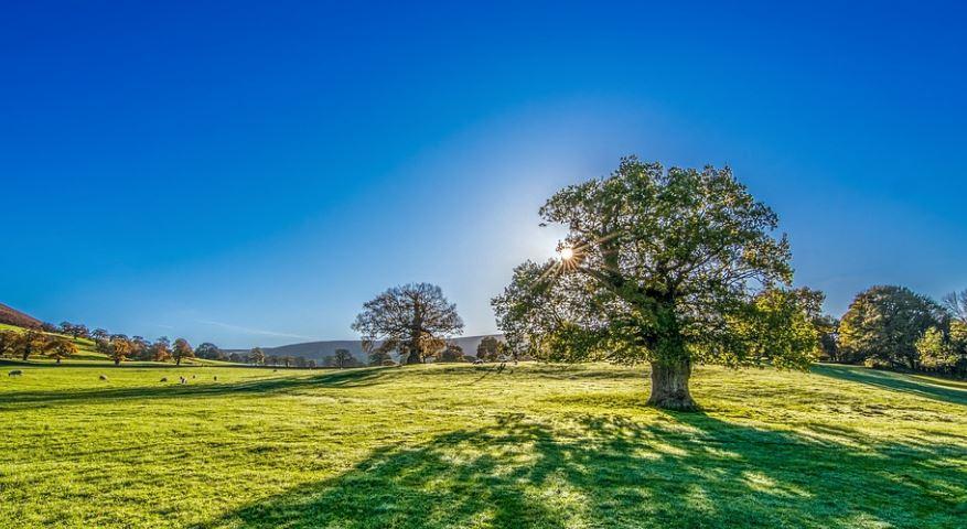 Drömtydning träd: Drömmar Betydelse, Symboler