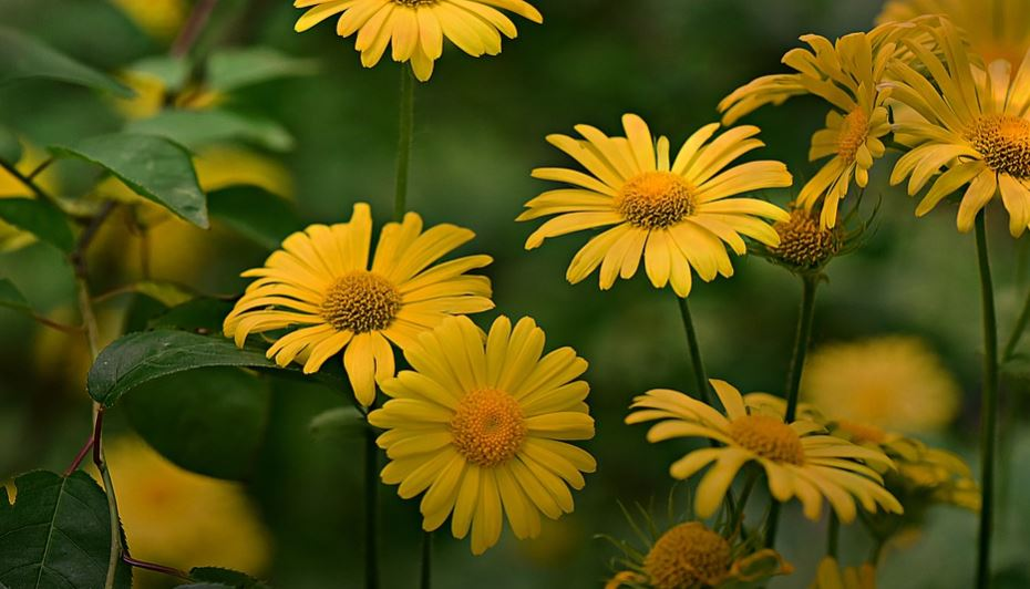 Drömtydning blommor: Drömmar Betydelse, Symboler