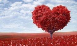Väduren Kärlek: Vad betyder mitt stjärntecken?