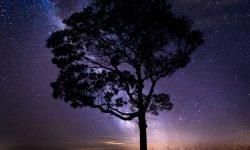 Horoskop: 22 januari stjärntecken