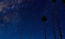 Horoskop: 1 augusti stjärntecken