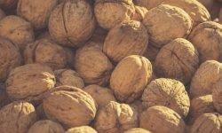 Är valnötter nyttigt? Allt för Hälsan
