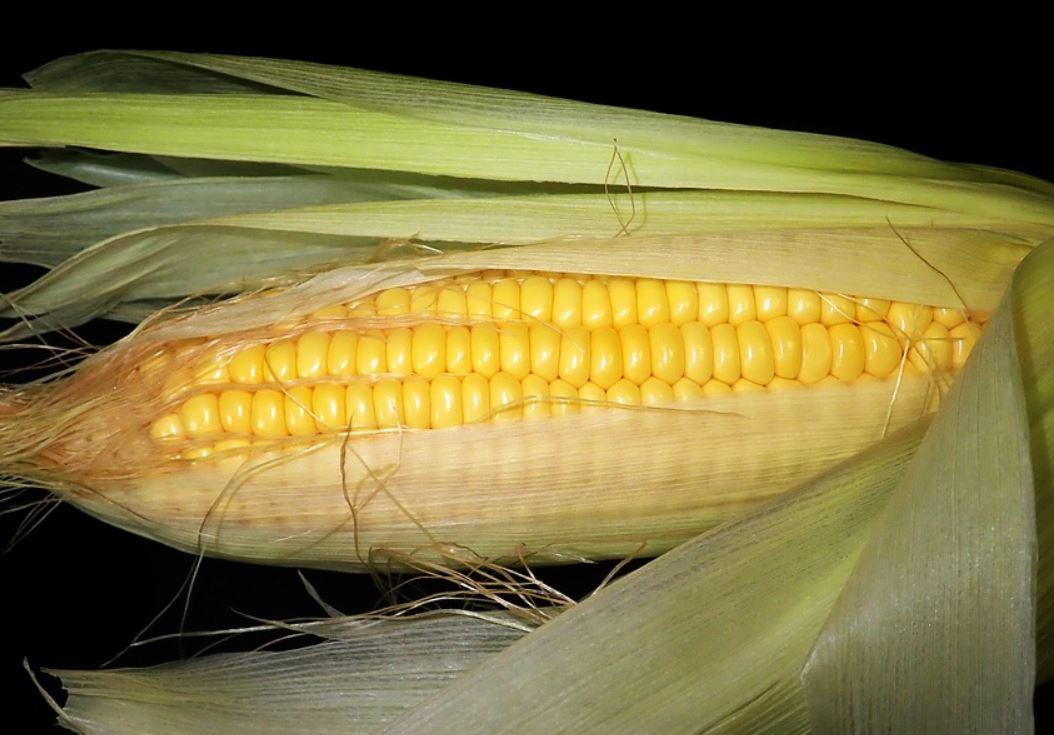 Är majs nyttigt?