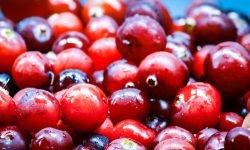 Är tranbär nyttigt? Allt för Hälsan