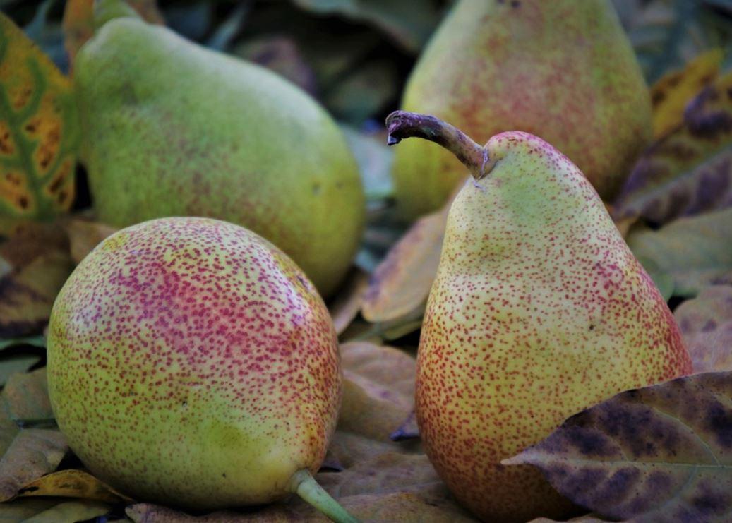 Är päron nyttigt?