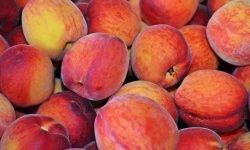 Är persika nyttigt? Allt för Hälsan