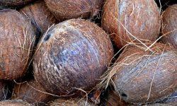 Är kokos nyttigt? Allt för Hälsan