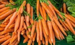 Är morötter nyttigt? Allt för Hälsan