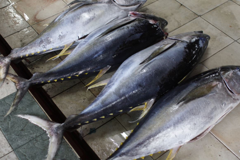 Är tonfisk nyttigt