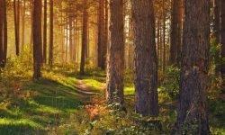 Drömtydning skog - Vad betyder det?