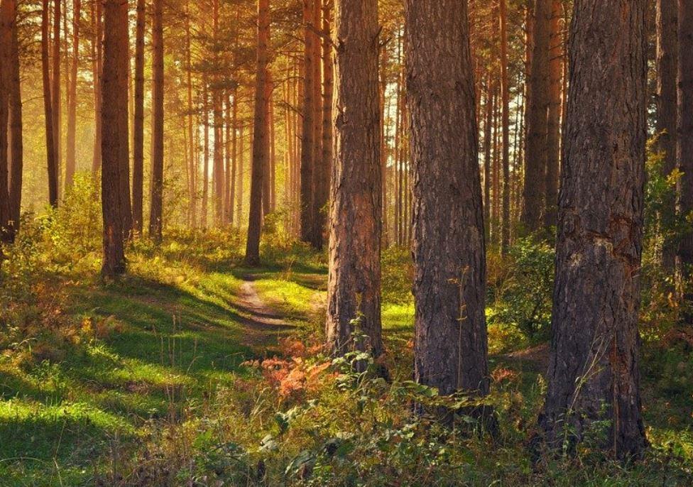 Drömtydning skog