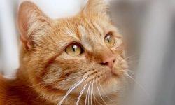 Drömtydning katt - Vad betyder det?