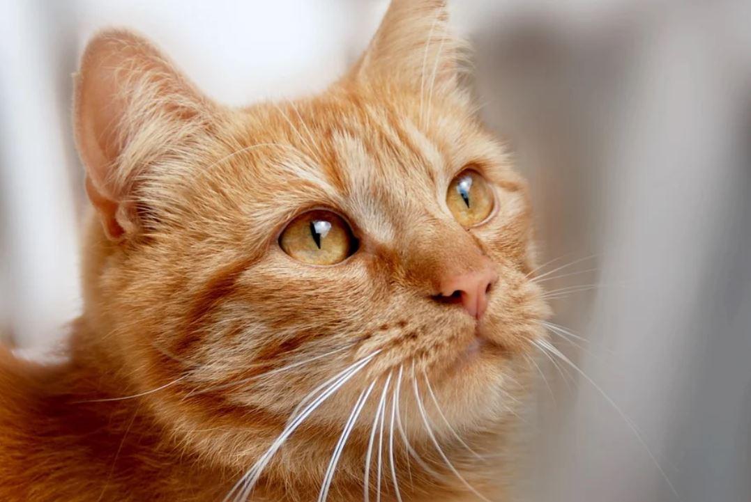 Drömtydning katt