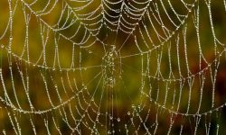 Drömtydning spindelnät - Vad betyder det?