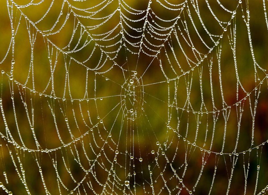 Drömtydning spindelnät